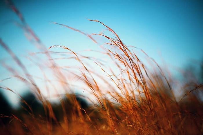 /images/companies/brandinfo/hình ảnh/Wordpress/close-up-field-grass-outdoors-preview.jpg